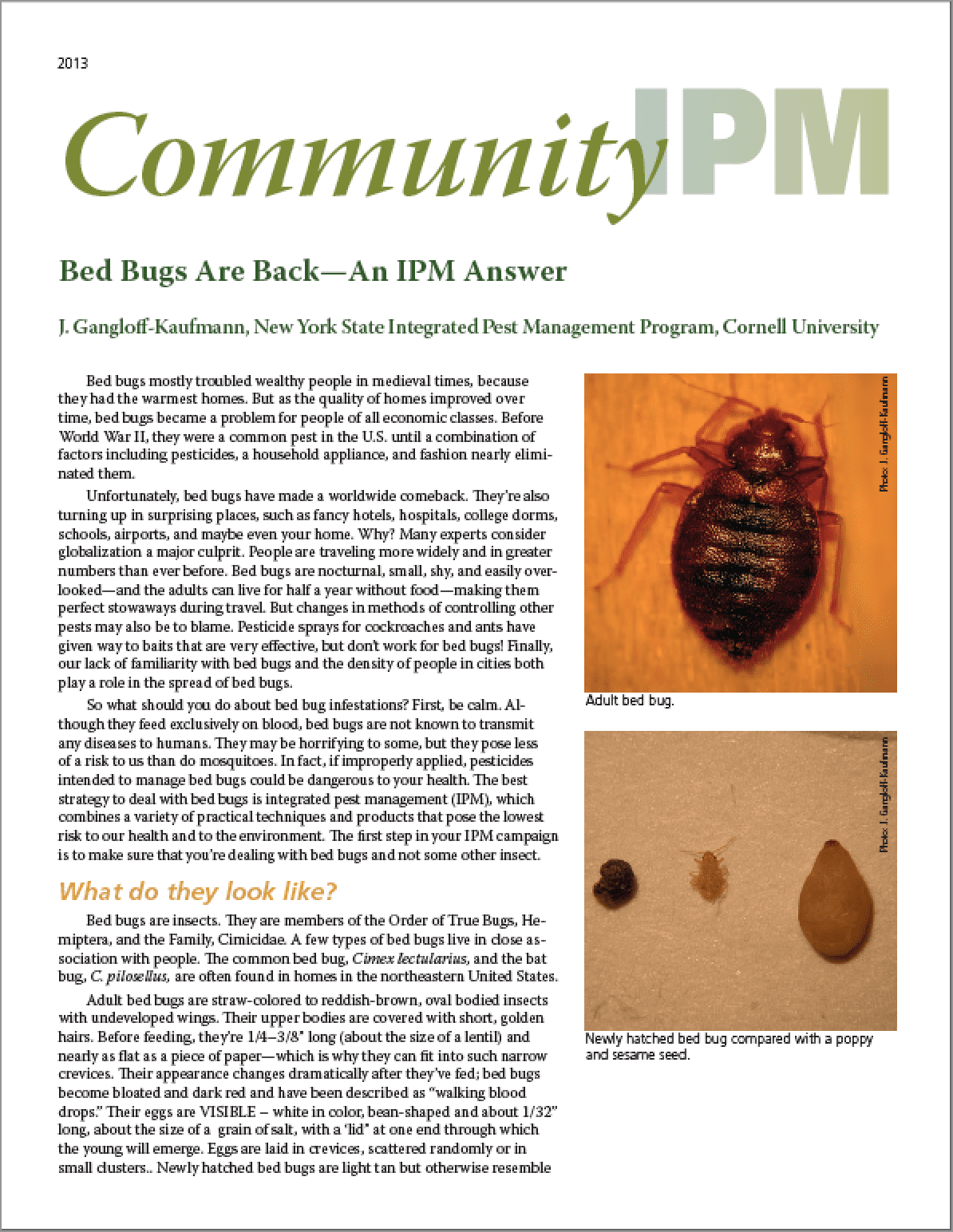 Bed Bugs Are Back, An IPM Answer. This Fact Sheet ...