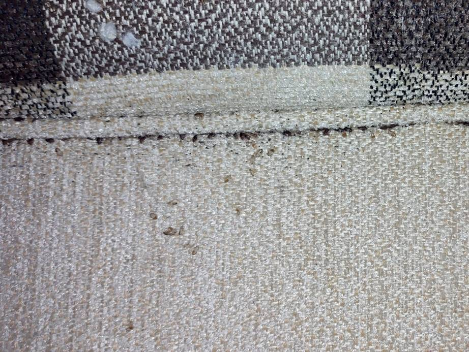 Bed bug infestation found in an old couch