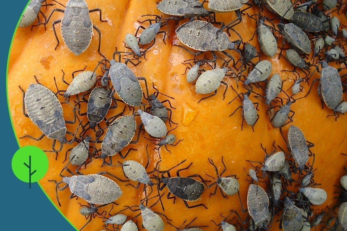 Autumn pests crawling on a pumpkin during the fall